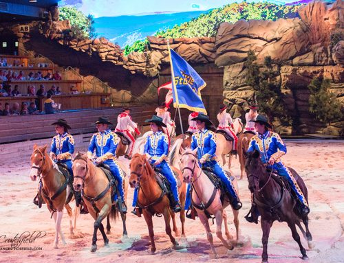 Don't Miss Dixie Stampede