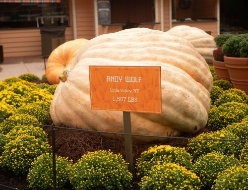 What's New for Dollywood's Harvest Festival