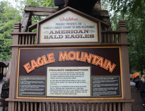 Behind the Scenes with the American Eagle Foundation at Dollywood