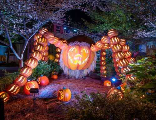 Dollywood Pumpkin Facts